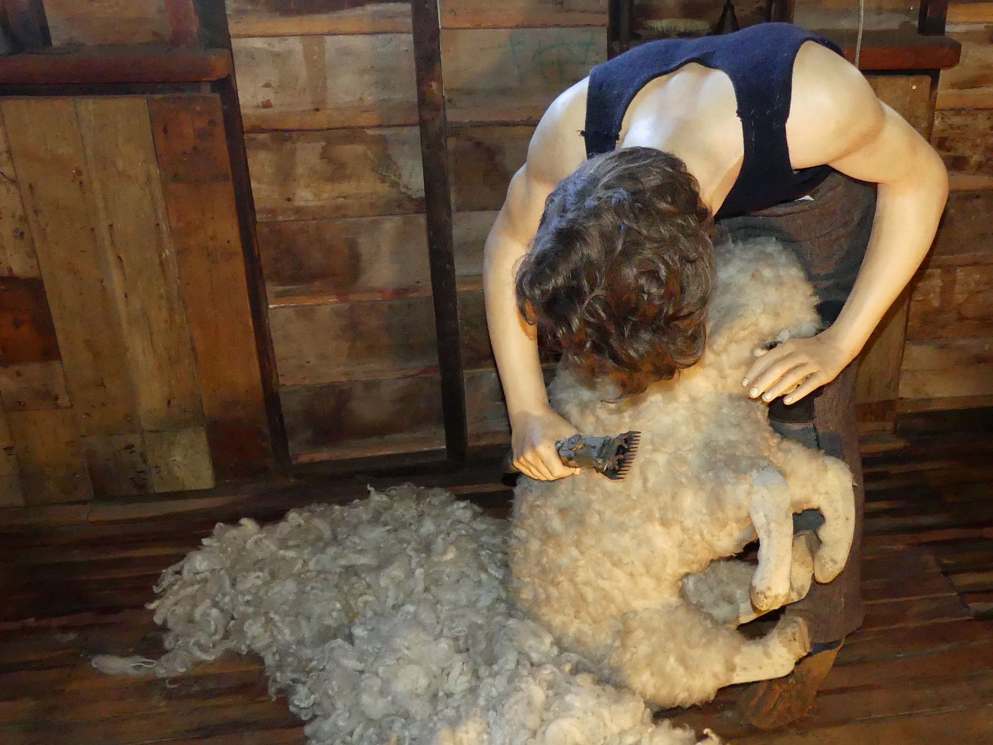 National Museum Of Sheep Shearing Colinspics